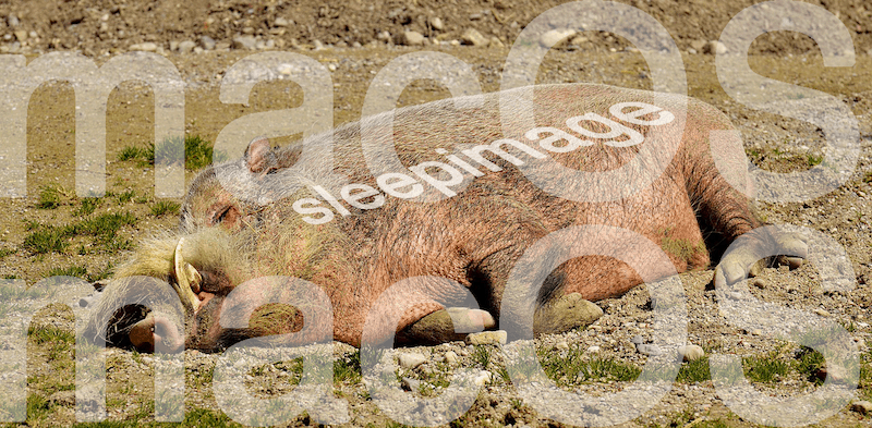 macOS sleepimage